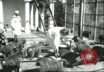 Image of monkey nursery Russia, 1956, second 3 stock footage video 65675064617