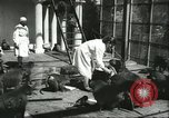 Image of monkey nursery Russia, 1956, second 5 stock footage video 65675064617