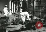 Image of monkey nursery Russia, 1956, second 6 stock footage video 65675064617