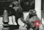 Image of monkey nursery Russia, 1956, second 7 stock footage video 65675064617