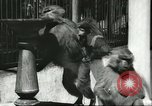 Image of monkey nursery Russia, 1956, second 8 stock footage video 65675064617