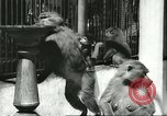Image of monkey nursery Russia, 1956, second 10 stock footage video 65675064617