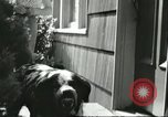 Image of American Humane Association Seattle Washington USA, 1956, second 9 stock footage video 65675064651