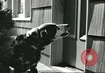 Image of American Humane Association Seattle Washington USA, 1956, second 12 stock footage video 65675064651