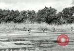 Image of European troops Egypt, 1956, second 8 stock footage video 65675064689