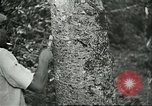 Image of Brazilian workers Brazil, 1942, second 6 stock footage video 65675064716