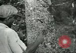 Image of Brazilian workers Brazil, 1942, second 10 stock footage video 65675064716