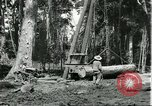 Image of rubber forests Brazil, 1932, second 2 stock footage video 65675064731