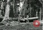 Image of rubber forests Brazil, 1932, second 3 stock footage video 65675064731