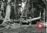 Image of rubber forests Brazil, 1932, second 4 stock footage video 65675064731