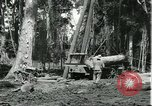 Image of rubber forests Brazil, 1932, second 5 stock footage video 65675064731