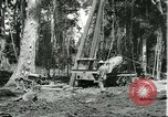 Image of rubber forests Brazil, 1932, second 6 stock footage video 65675064731