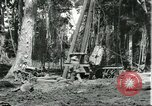 Image of rubber forests Brazil, 1932, second 7 stock footage video 65675064731