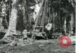 Image of rubber forests Brazil, 1932, second 8 stock footage video 65675064731