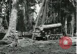 Image of rubber forests Brazil, 1932, second 10 stock footage video 65675064731