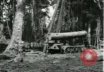Image of rubber forests Brazil, 1932, second 11 stock footage video 65675064731
