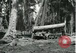 Image of rubber forests Brazil, 1932, second 12 stock footage video 65675064731