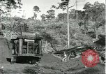 Image of lumber industry Brazil, 1932, second 7 stock footage video 65675064733