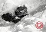 Image of United States Marines Arctic region, 1955, second 1 stock footage video 65675064865