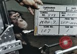 Image of training of chimpanzee New Mexico United States USA, 1960, second 1 stock footage video 65675065062