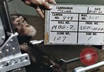 Image of training of chimpanzee New Mexico United States USA, 1960, second 6 stock footage video 65675065062