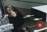 Image of training of chimpanzee New Mexico United States USA, 1960, second 7 stock footage video 65675065062