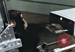 Image of training of chimpanzee New Mexico United States USA, 1960, second 10 stock footage video 65675065062