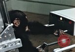 Image of training of chimpanzee New Mexico United States USA, 1960, second 11 stock footage video 65675065062