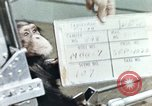 Image of training of chimpanzee New Mexico United States USA, 1960, second 2 stock footage video 65675065063