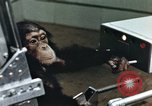 Image of training of chimpanzee New Mexico United States USA, 1960, second 9 stock footage video 65675065063