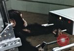 Image of training of chimpanzee New Mexico United States USA, 1960, second 10 stock footage video 65675065063