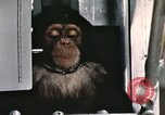 Image of training of chimpanzee New Mexico United States USA, 1960, second 7 stock footage video 65675065067