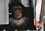 Image of training of chimpanzee New Mexico United States USA, 1960, second 9 stock footage video 65675065067