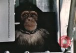 Image of training of chimpanzee New Mexico United States USA, 1960, second 10 stock footage video 65675065067