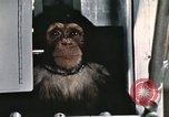 Image of training of chimpanzee New Mexico United States USA, 1960, second 11 stock footage video 65675065067