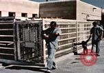 Image of training of chimpanzee New Mexico United States USA, 1960, second 11 stock footage video 65675065072