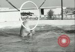 Image of porpoise Marineland Florida USA, 1951, second 7 stock footage video 65675065088