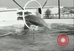 Image of porpoise Marineland Florida USA, 1951, second 8 stock footage video 65675065088