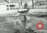 Image of porpoise Marineland Florida USA, 1951, second 9 stock footage video 65675065088