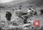 Image of Palestine civilians Palestine, 1945, second 8 stock footage video 65675065132