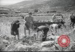 Image of Palestine civilians Palestine, 1945, second 11 stock footage video 65675065132