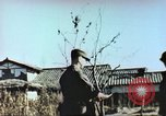 Image of Korean War Korea, 1951, second 9 stock footage video 65675065183