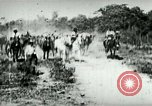 Image of army mules carry ammunition Cuba, 1898, second 2 stock footage video 65675065296