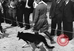 Image of dog show Norway, 1941, second 2 stock footage video 65675065470