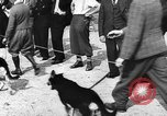 Image of dog show Norway, 1941, second 3 stock footage video 65675065470