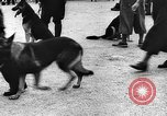 Image of dog show Norway, 1941, second 4 stock footage video 65675065470