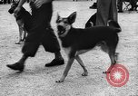 Image of dog show Norway, 1941, second 5 stock footage video 65675065470