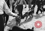 Image of dog show Norway, 1941, second 9 stock footage video 65675065470