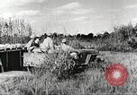 Image of Indian troops Assam India, 1944, second 8 stock footage video 65675065498