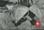 Image of cleaning operations European Theater, 1916, second 10 stock footage video 65675065538